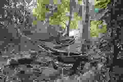 Gia Lai: Nghe người gác rừng kể chuyện nghề giữa chốn thâm sơn