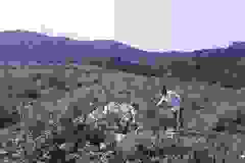 Vụ một thửa đất có 2 chủ ở Quảng Bình: Thu hồi thêm 27 sổ đỏ cấp sai!