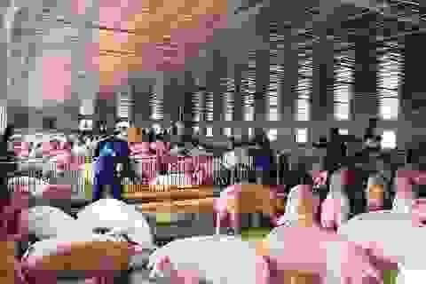 Bộ trưởng Nông nghiệp nói thật lý do giá thịt lợn vẫn quá đắt