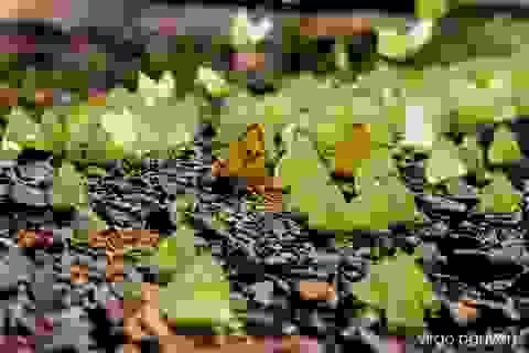 Tháng 4 Tây Nguyên rực rỡ với hàng triệu con bướm vàng