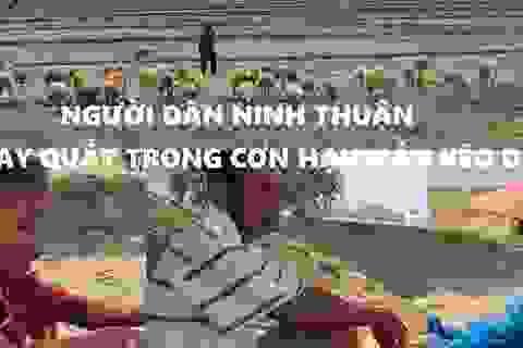 Người dân Ninh Thuận quay quắt trong cơn hạn hán kéo dài