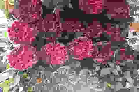 200 đồng/bông hồng, rẻ chưa từng có, mỗi ngày bán cả vạn bông