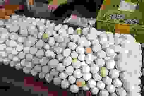 Trứng gà rẻ hơn rau, chủ trang trại lỗ chục tỷ đồng