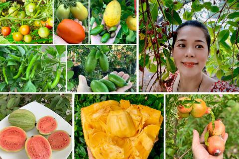 Ngất ngây với vườn cây trái trĩu quả của ca sĩ Mỹ Lệ