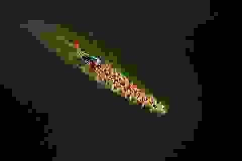 Những khoảnh khắc nhiếp ảnh thể thao đẹp nhất của Việt Nam