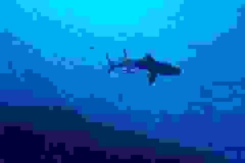100 năm nữa một số loài động vật biển lớn sẽ tuyệt chủng?