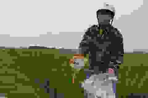 Người lính già đi nhặt bao thuốc trừ sâu bảo vệ môi trường