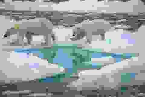 Bắc Cực sẽ hoàn toàn không có băng vào mùa hè trước năm 2050