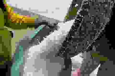 Bán 20 kg muối mới mua được 1 kg gạo