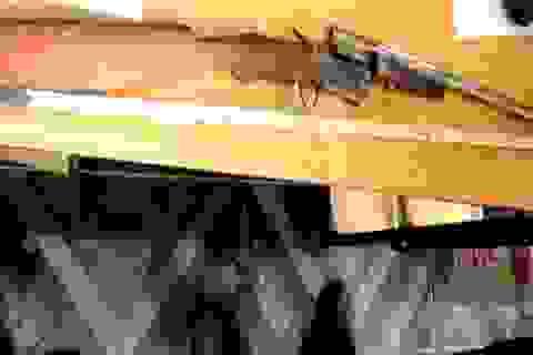 Tình tiết bất ngờ của vụ án vợ bắn chết chồng bằng súng tự chế