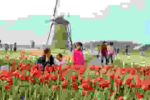 Thành phố cắt bỏ 100.000 bông hoa nhằm tránh người tới ngắm quá đông