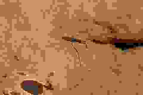 Ngày tận thế của côn trùng phức tạp hơn chúng ta nghĩ