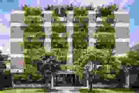 """Những tòa nhà """"phủ kín"""" cây xanh ấn tượng thế giới, Việt Nam cũng góp mặt"""