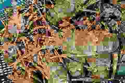 Hải sản 'nhà giàu' ồ ạt giảm giá: Nghỉ lễ chọn nhậu cá hồi, tôm hùm
