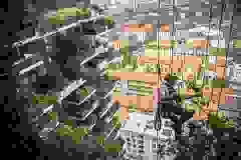 Tòa chung cư phủ kín cây xanh như rừng nhiệt đới, ai nhìn cũng muốn ở