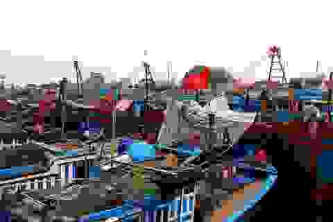 Hàng ngàn tàu cá có nguy cơ không được xuất bến