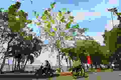 """Con đường """"nhuộm kín"""" sắc hoa muồng hoàng yến, đẹp nên thơ ở Hà Nội"""