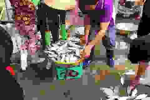 Nhộn nhịp chợ cá Phước Hải - Bà Rịa