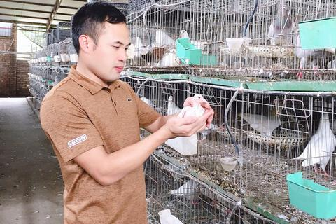 Bỏ nghề lập trình về nuôi chim bồ câu, thu 15 tỷ đồng, lãi 3 tỷ đồng/năm