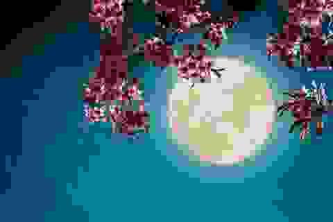 Làm thế nào để chiêm ngưỡng siêu trăng cuối cùng của năm 2020?