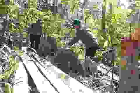 """Vụ """"lâm tặc"""" mở đường phá rừng ở Phú Yên: La liệt gỗ bị bỏ lại hiện trường!"""