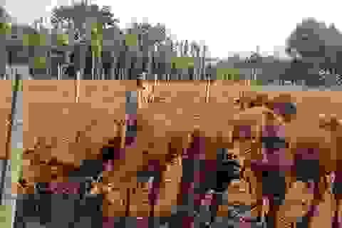 Sau học nghề, nông dân được tiếp vốn ưu đãi để làm giàu