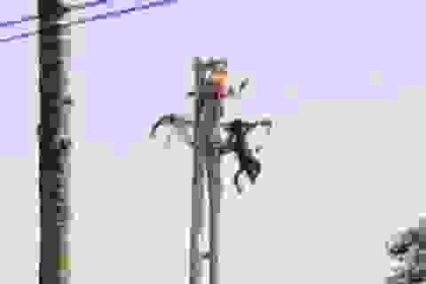 Nhân viên điện lực bị điện giật tử vong