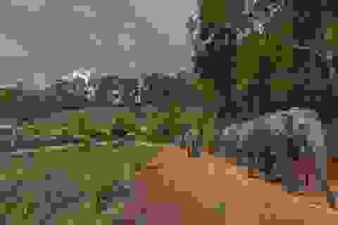 """Hàng trăm con voi đi bộ về quê vì """"thất nghiệp"""""""