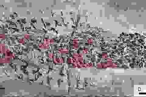 Vụ tấn công thất bại của một con mực cổ đại