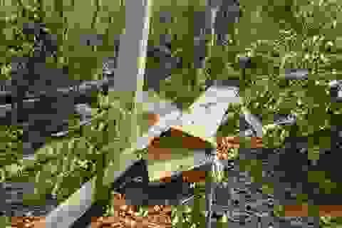 Rừng giáp ranh Đắk Lắk - Gia Lai bị tàn phá đáng báo động