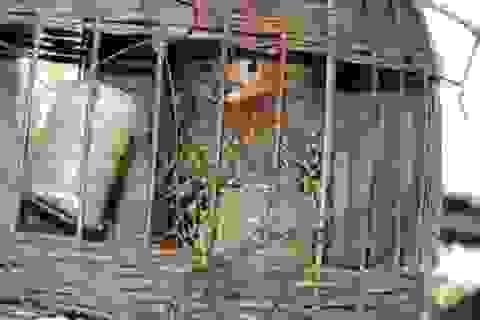 Phát hiện 3 loài mới lần đầu xuất hiện ở Khu bảo tồn thiên nhiên Pù Hoạt