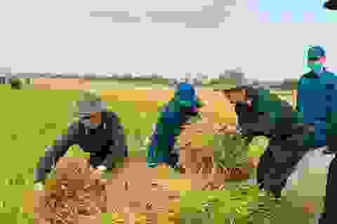 Bộ đội căng mình giữa nắng nóng giúp dân gặt lúa, sửa nhà