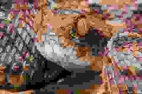 Bất ngờ phát hiện 1 loại thuốc sẵn có chữa được rắn cắn