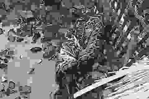 Clip trăn khổng lồ trộm vịt của nông dân Trung Quốc