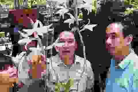Choáng những giỏ hoa lan đột biến hiếm thấy ở Hà Nội, giá hàng trăm triệu