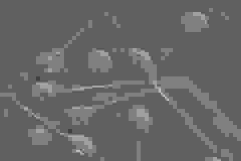 Tìm thấy sinh vật đầu tiên không cần ôxy để sống sót