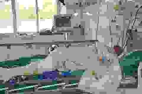 Xót xa người vợ trẻ đi hái mít bị điện cao thế giật nguy kịch đến tính mạng