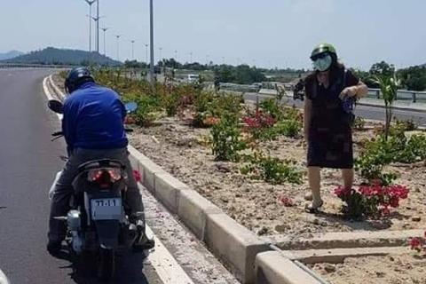 Hàng nghìn gốc hoa giấy trên quốc lộ 4.400 tỷ bị nhổ trộm