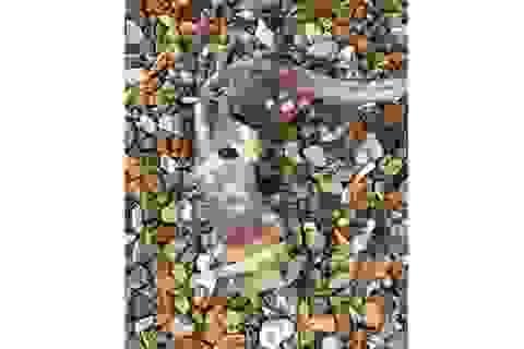 """Sinh vật biển bí ẩn """"có răng trên đuôi"""" xuất hiện tại Anh"""