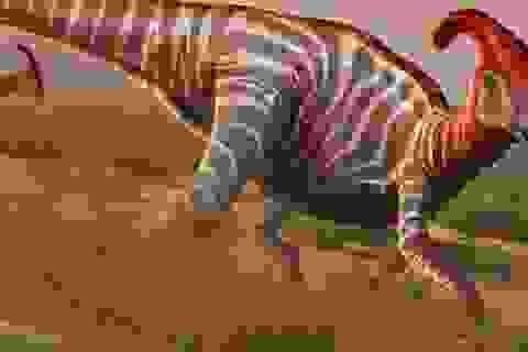 Bí ẩn về sự khác biệt giới tính khủng long đực và cái