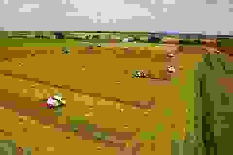Vĩnh Long: Chuẩn bị xây Bảo tàng nông nghiệp vùng ĐBSCL trị giá 400 tỷ đồng