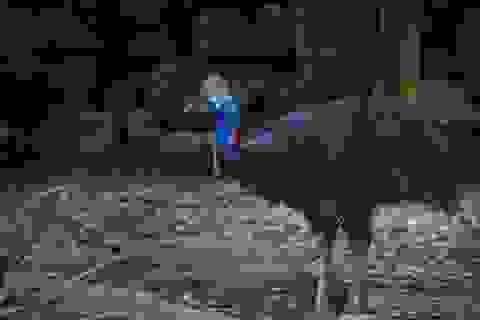Tiết lộ về bộ lông đặc biệt của loài chim nguy hiểm nhất thế giới