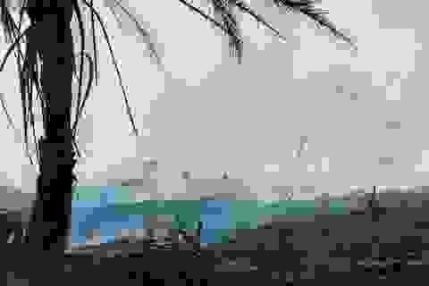 Thảm cảnh của rừng Amazon giữa đại dịch Covid-19