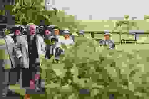 Chủ tịch Hồ Chí Minh luôn còn mãi với non sông đất nước!