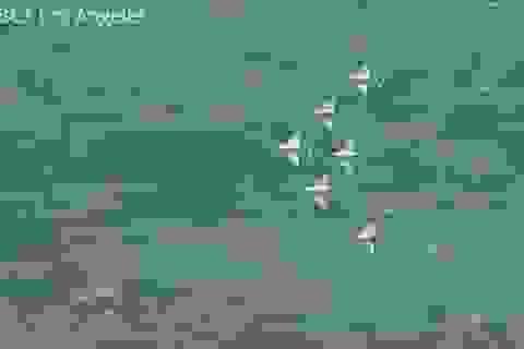 Video: Nghẹt thở với màn bay biểu diễn của không quân Mỹ