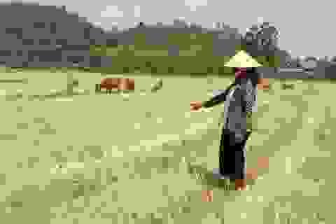 Hạn hán khốc liệt tại Đắk Lắk