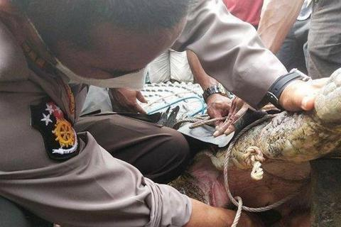 Bắt cá sấu không… răng dìm chết thiếu nữ 17 tuổi