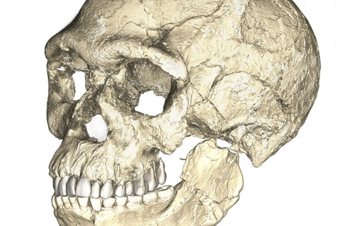 Con người cũng sẽ tuyệt chủng như các loài động vật khác?