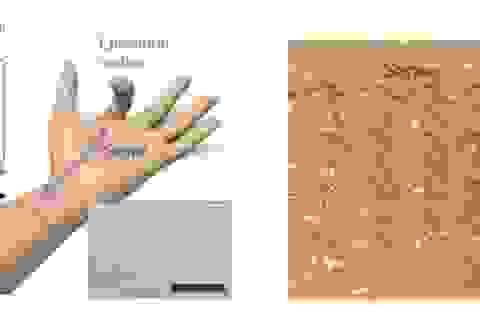 Cảm biến da điện tử có thể nắm bắt các chuyển động phức tạp của con người