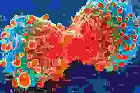 """Xem tế bào ung thư """"ăn thịt"""" đồng loại để sinh tồn"""